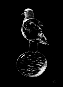 Floating Gull 8x11, 1-2014 scratchboard art