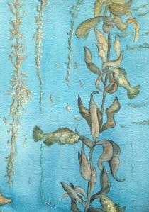 Kelp Forest Dalna Mills