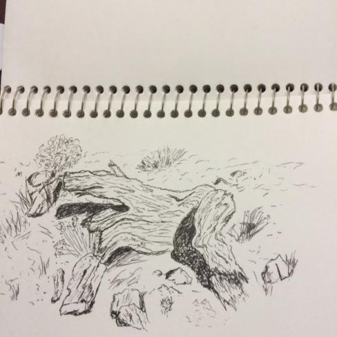 tom-frey-bristlecone-pine-pen
