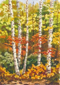 birch-forest-stage-5
