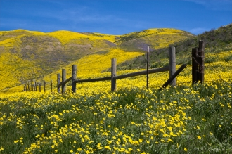 The Hills Are Alive - Cheryl Strahl