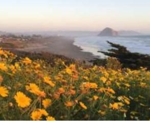 painting seaside flowers